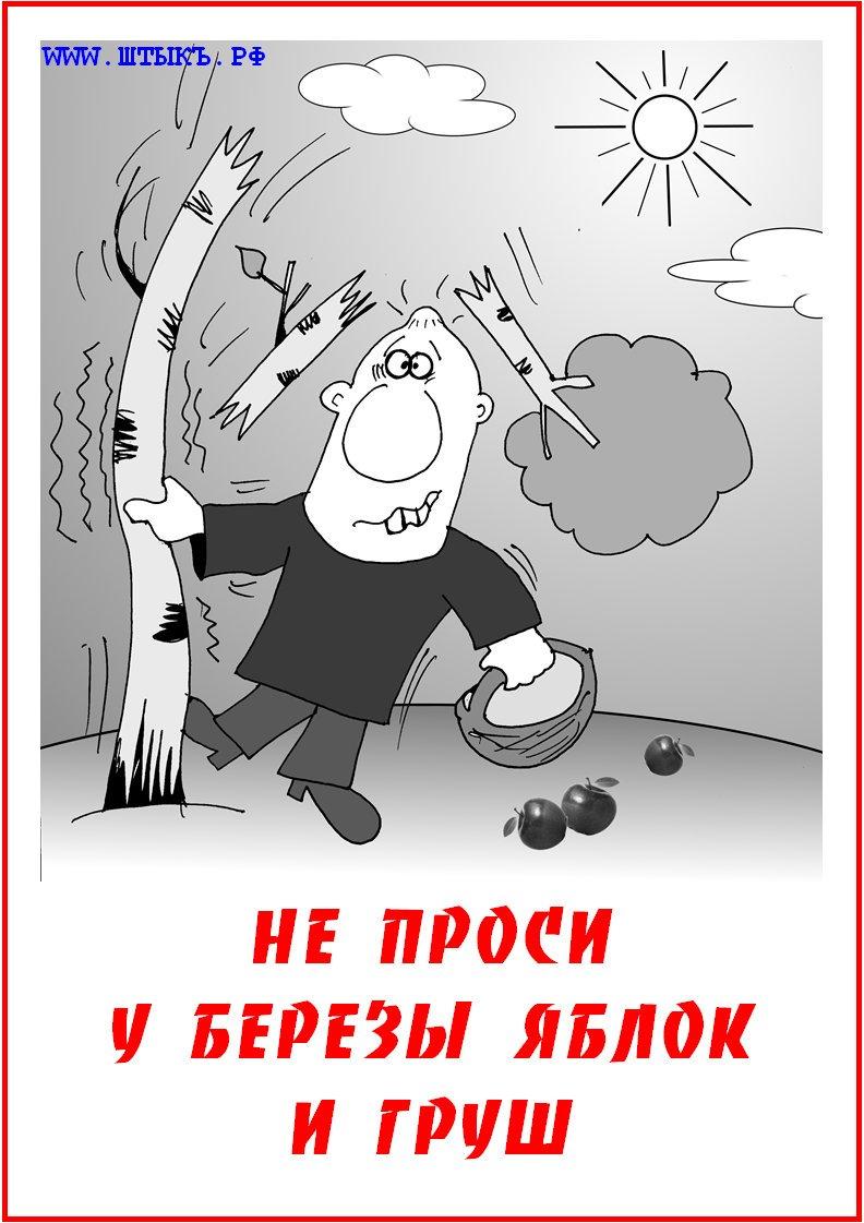 Шутки, приколы, пословицы и поговорки в смешных карикатурах: Яблоки на березе