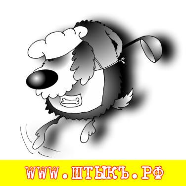 Анекдоты, пословицы, поговорки, приколы с картинками про собак