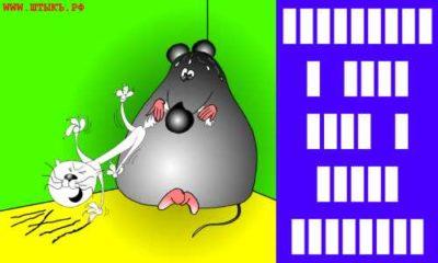 Головоломки и ребусы в картинках: Мышь кусает кошку?
