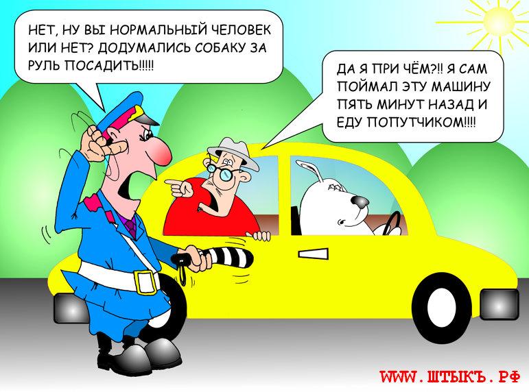 Юмор, шутки, приколы, анекдоты с рисунками про гаи: собачка за рулем