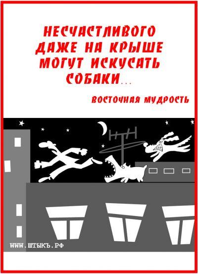 Прикольная пословица с картинкой: Несчастливого, даже на крыше могут искусать собаки