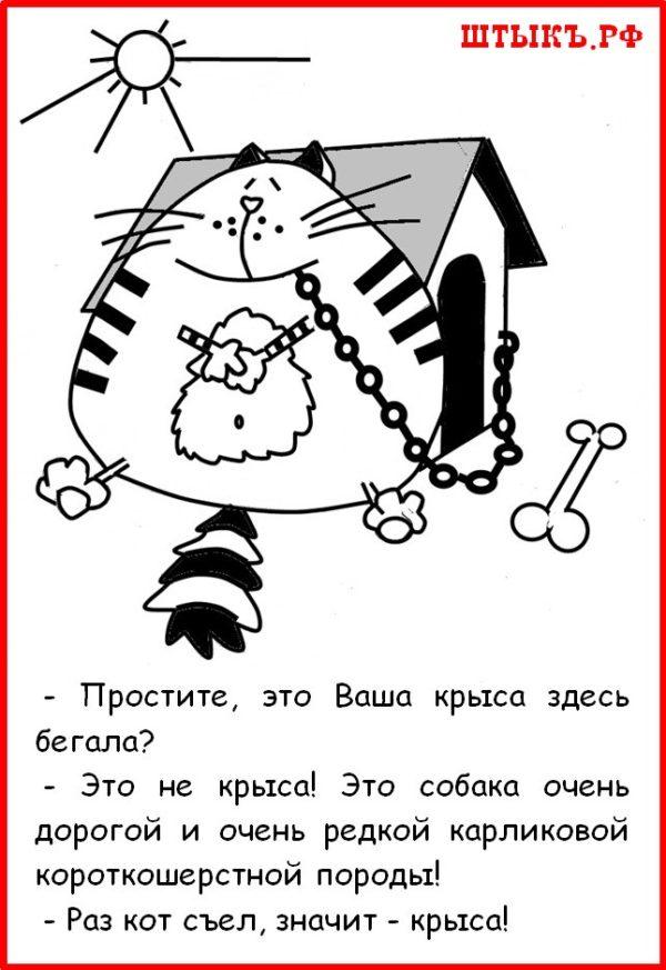 Юмор, шутки, веселые картинки, короткие анекдоты про котов