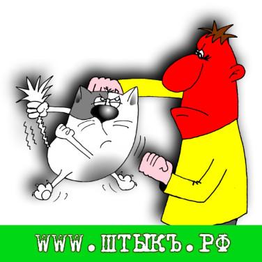 Приколы с картинками про кошек