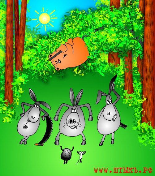 Смешные анекдоты, прикольные картинки: Указы и ослы