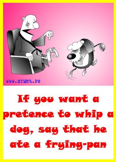 Афоризмы в картинках на английском про собак