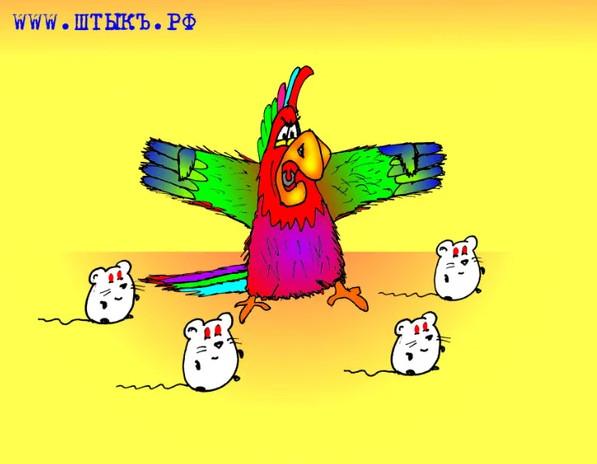 Попугай. Карикатура